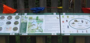 Lecterns depicting wildlife found in the school grounds